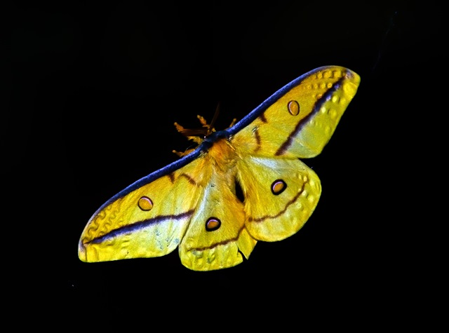 moth-425162